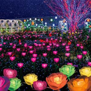 Field Of Lit Up Poppies At Ashikaga Flower Park