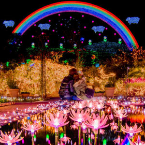 Spend A Romantic Evening At Ashikaga Flower Park