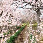 nearby-tokyo-tochigi-city-sakura-A02