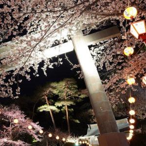 Beautiful Sakura At The Night Cherry Blossom Festival In Kinugawa Onsen