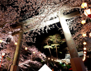 Night Cherry Blossom Festival in Kinugawa Onsen every April