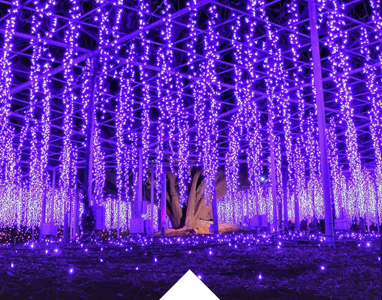 Astonishing beauty of illuminations at Ashikaga Flower Park