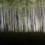 Night light up at Wakayama Bamboo Forest in Utsunomiya city