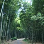 Wakayama Bamboo forest in Utsunomiya city (Nearby Tokyo)